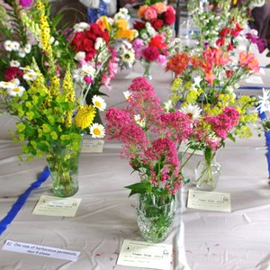 Mickleham and Westhumble Horticultural Society July 2013 show pictures