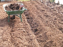 Fill trench with compost