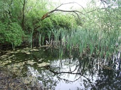 Bleasby Community Website Jubilee Ponds