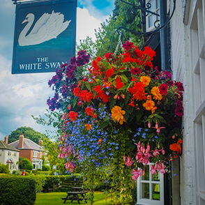 Beautiful flowers in bloom at The WHite Swan.