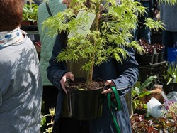 Mentmore Parish Council Mentmore Plant Sale 2017