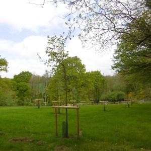 Natural burial area of the new Cemetery