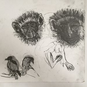 """Study of monkey`s faces with two birds""  30cm x 30cm"